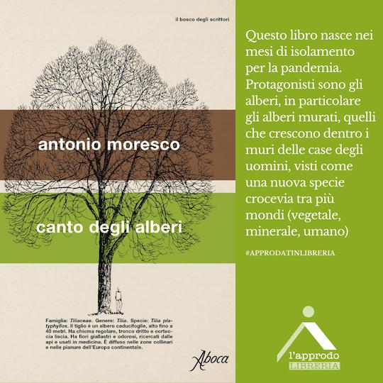 moresco_canto_alberi
